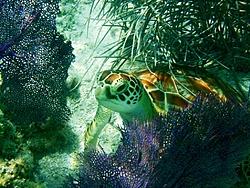 Caribbean Scenery and Fun!-turtle-1.jpg