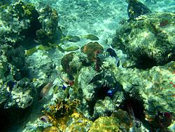 Caribbean Scenery and Fun!-fish-1.jpg