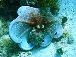 Caribbean Scenery and Fun!-octopus9-sm.jpg