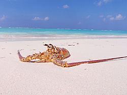 Caribbean Scenery and Fun!-anegada-lob-1-sm.jpg