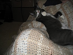 I know most of you do not like cats but-img_0246-small-.jpg