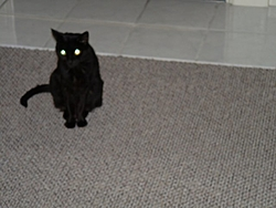 I know most of you do not like cats but-2004_0429_191511aa.jpg