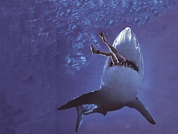 Jaws-shark-attack.jpg