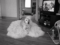 Hello everyone...here is an update on me-tara-dog-rug.jpg