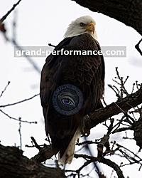 Digital Cameras-animals-8x10-01.jpg