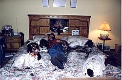 Murphy's gone-frank-phone-5-dogs-bed-.jpg