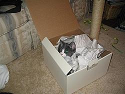 O/T free kitten to good home in Sarasota-img_0203-small-.jpg