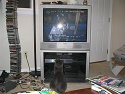 O/T free kitten to good home in Sarasota-yankees-loose-small-.jpg