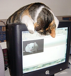 O/T free kitten to good home in Sarasota-mycat.jpg