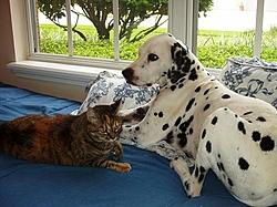 O/T free kitten to good home in Sarasota-pongo-tigger.jpg