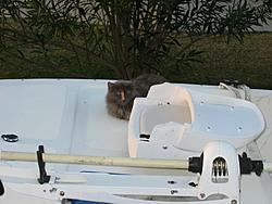 O/T free kitten to good home in Sarasota-fluff-001.jpg