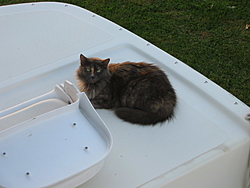 O/T free kitten to good home in Sarasota-fluff-002.jpg