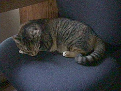 O/T free kitten to good home in Sarasota-dsc00040_0001.jpg