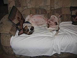 How come I can't post a frickin' picture ?-christmas-2004-028.jpg