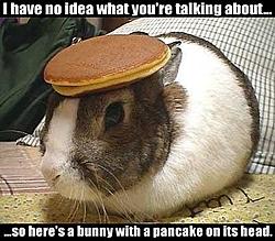 Is SHANE really our friend??????-bunnypancake.jpg