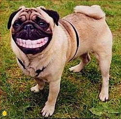 Headcount for NY Boatshow Party - Thurdsay Night-smilingdog.jpg