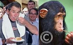 chimps n' boats-pic47.jpg