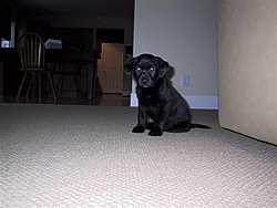 The new Second Mate is Home.-kc-dog-12005-006-small-.jpg