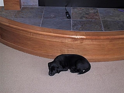 The new Second Mate is Home.-kc-dog-12005-008-small-.jpg