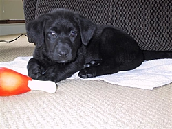 The new Second Mate is Home.-kc-dog-12005-018-small-.jpg