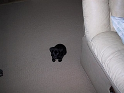 The new Second Mate is Home.-kc-dog-12005-004-small-.jpg