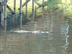 St. Johns River-july-7-04-011.jpg