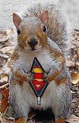 Who's who-supersquirrel.jpg