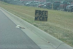 Post whored to 2000-freecat.jpg