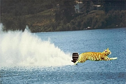 Help...need a pic looking back from the stern , roostertail, pref. outboard cat.-cattail.jpg