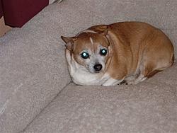 meet my little buddy!!!!!-1-sassy-laying-down.jpg