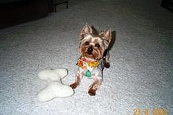 meet my little buddy!!!!!-dcp_0365-bandit.jpg