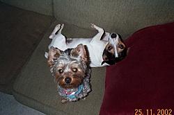 meet my little buddy!!!!!-pep-ban-couch.jpg
