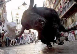 Post you extreme pic's-bull.bmp