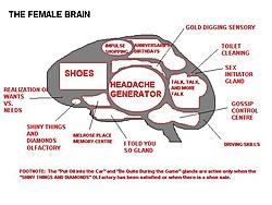 Degradeing womens jokes !!!-femalebrain.jpg