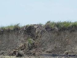 Make Your Own Beak Boat-searay-wreck4.jpg