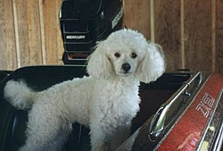 A Happy Birthday to our good POODLE buddy Jeffrey!-poodle-boat.jpg