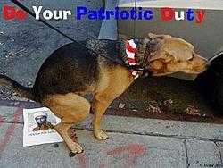 Osama Oh-so-funnys-dogs.jpg