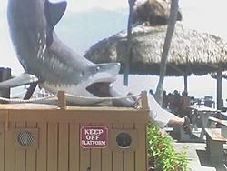 New OSO game.....Where's Steve.-holiday-shark.jpg