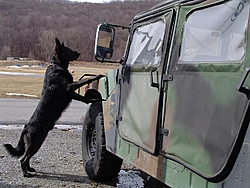 put dhlaw's thread back up!!!!!-humvee.jpg