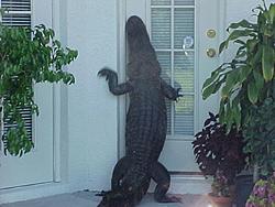 Attn. Florida Gator......-gator.jpg