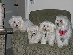 Animal Rescues from Katrina-4-puppies-medium-.jpg