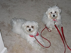 Animal Rescues from Katrina-img_0043-medium-2-.jpg