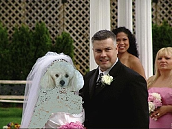 finally getting the dash done....-poodle-wedding.jpg
