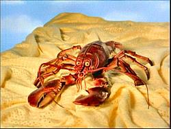 Florida Key's under water ?????-lobster.jpg