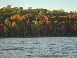 Boating in Washington DC in November (Pics!)-trees.jpg