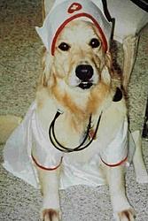 Prayers needed for Magnum Mark....-hospital-doggy-3-.jpg