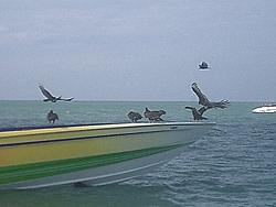 Some Key West pics-key-west-05-117.jpg