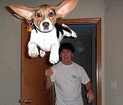 CPC invites Reggie to Chicago Boat Show-dog-attack.jpg
