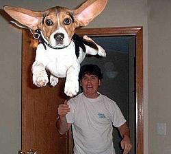 CPC invites Reggie to Chicago Boat Show-dog-attack2.jpg