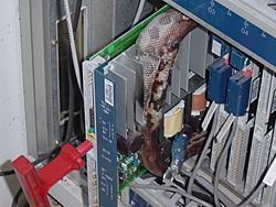 Job hazards!!-cobrahta1.jpg